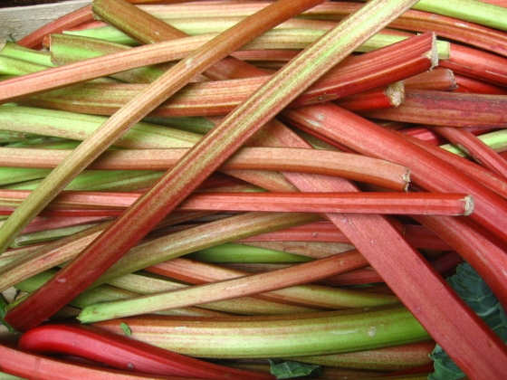 """Rhubarb (4701344946)"" by Jeremy Keith from Brighton & Hove, United Kingdom - RhubarbUploaded by Fæ. Licensed under CC BY 2.0 via Wikimedia Commons - http://commons.wikimedia.org/wiki/File:Rhubarb_(4701344946).jpg#/media/File:Rhubarb_(4701344946).jpg"